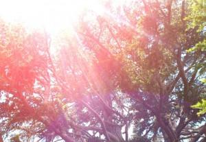 panther-tree